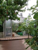 Frühpfirsichbaum mit Feige