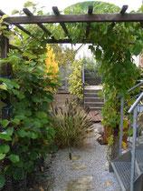 Durchgang umrankt von Passiflora und Kiwi