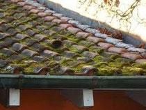 bemoostes Dach