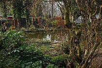 Der Teichgarten im März