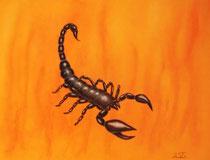 Skorpion ...... gerahmt 60x40cm        Nicht mehr zu haben♥