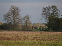 Im Winkel - Blick über die Wiesen