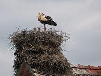 Wohl das höchste Nest in Rühstädt?