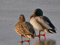 Ob wir einen Spaziergang auf dem Eis wagen?