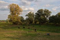 Poitou-Esel in Mödlich
