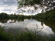 "Naturschutzgebiet ""In den Weiden"", Fuldaaue bei Blankenheim"