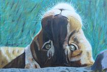 Löwin, Acryl auf Leinwand, 80x120x2 cm
