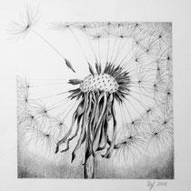Pusteblume  Bleistiftzeichnung  verkauft