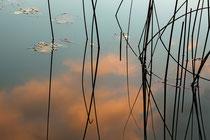 Reflexion, Sandra Walkowiak