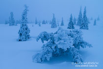 Schneemonster, Alex Wünsch