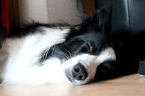 Auch beim Schlafen immer ein Auge offen!