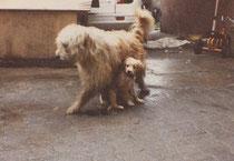 Stella mit Ben dem Hund der Vermieter. Die beiden hatten später auch einen Onenightstand!