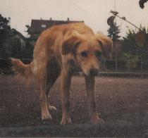 Stella auf dem Bolzplatz - hier ist sie des öfteren mal dem Ball der Fußballspieler nachgewetzt