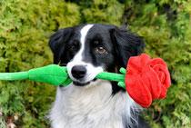 ... wolle Rosen kaufen?