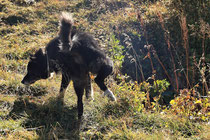 Rax - 06.Oktober 2012 - Hund schreibt was in das Tagesblatt