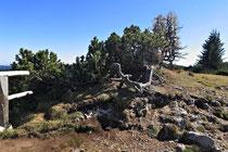 Rax - 06.Oktober 2012 - Als Baum hat man es hier nicht leicht.