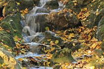 Neunkirchen - Stadtpark - 2013-10-15_49