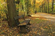 Neunkirchen - Stadtpark - 2013-10-15_27