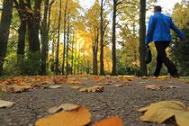 Neunkirchen - Stadtpark - 2013-10-15_24