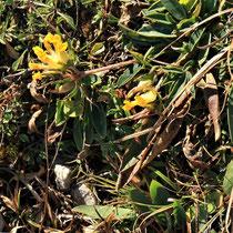 Rax - 06.Oktober 2012 - auch im Herbst blüht noch ganz viel