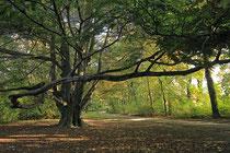 Neunkirchen - Stadtpark - 2013-10-15_34