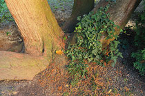 Neunkirchen - Stadtpark - 2013-10-15_15