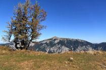 Rax - 06.Oktober 2012 - Schneeberg mit Baum