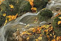 Neunkirchen - Stadtpark - 2013-10-15_60