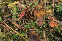 Rax - 18.Oktober 2014 - Vielfalt des Herbst