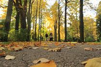Neunkirchen - Stadtpark - 2013-10-15_23xx