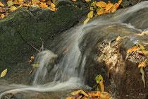 Neunkirchen - Stadtpark - 2013-10-15_57