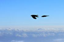 Schneeberg - 25.Oktober 2014_075 - ...über uns die Vögel.