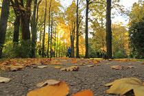 Neunkirchen - Stadtpark - 2013-10-15_25