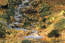 Neunkirchen - Stadtpark - 2013-10-15_53