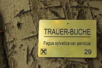 Neunkirchen - Stadtpark - 2013-10-15_32
