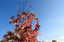 Neunkirchen - Stadtpark - 2013-10-15_48