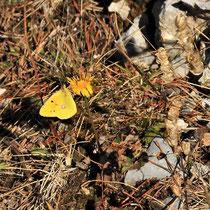 Rax - 06.Oktober 2012 - noch ein Schmetterling