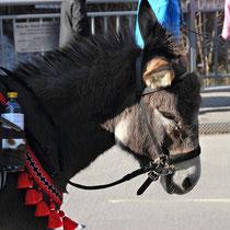 Neunkirchen Faschingsumzug 17.Februar 2015 - Nr.134
