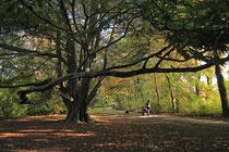Neunkirchen - Stadtpark - 2013-10-15_35