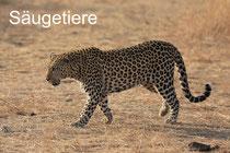 Säugetiere Südafrika