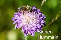 Bienen, Hummeln