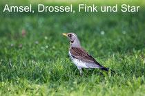 Amsel, Drossel, Fink und Star......