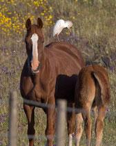 ...manchmal auch von Pferden (Castro Verde, Portugal)