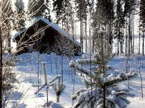 Starten Sie vom Mökki aus mit Langlaufski durch tiefverschneite Wälder oder über den gefrorenen See.