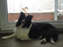 Frauchen - es schneit! Ich will raus...