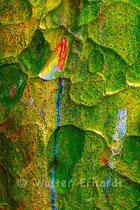 Borkenlandschaft