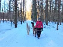 Ein toller Waldspaziergang im Schnee.