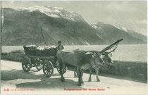 Ochsenfuhrwerk mit Korbwagen mit dem Monte Baldo im Hintergrund unterwegs auf der Strada del Ponale zwischen Riva und Limone am Gardasee. Lichtdruck 9 x 14 cm; Impressum: Edition Photoglob Zürich um 1905.  Inv.-Nr. vu914ld00259