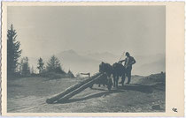 """Holzbringung mit der """"Schloapf"""" (mundartlich für Einachswagen) in Südtirol möglicherweise auf dem Tschögglberg? Gelatinesilberabzug 9x14cm, Eingeblendete Signatur """"GZ"""".  Inv-Nr. vu914gs00693"""