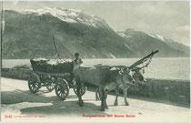 Zweispänniges Ochsenfuhrwerk mit Korbwagen unterwegs auf der Strada del Ponale zwischen Riva und Limone am Gardasee. Lichtdruck 9 x 14 cm; Impressum: Edition Photoglob Zürich um 1905.  Inv.-Nr. vu914ld00259